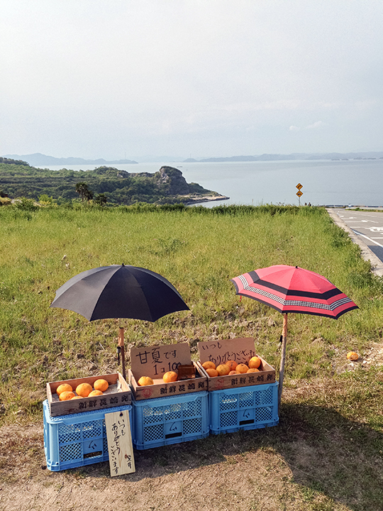 Local citrus fruit (amanatsu) available across from the Teshima Art Museum. The stand is unmanned and payment is on the honor system.